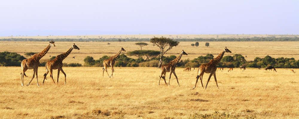 Safarirejse til afrika