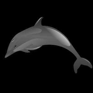 Oplev delfiner på Bali