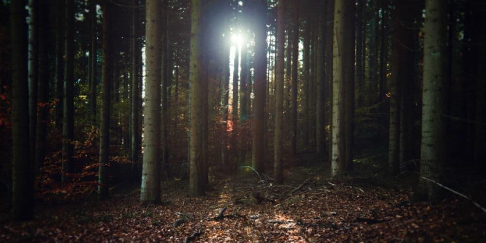 Sov ved en bålhytte i de danske skove