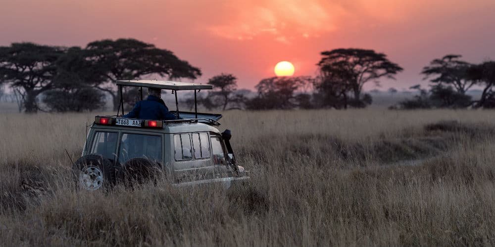 Tag på safari i Tanzania